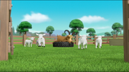 Sheep 58