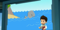 Baby Whale/Gallery