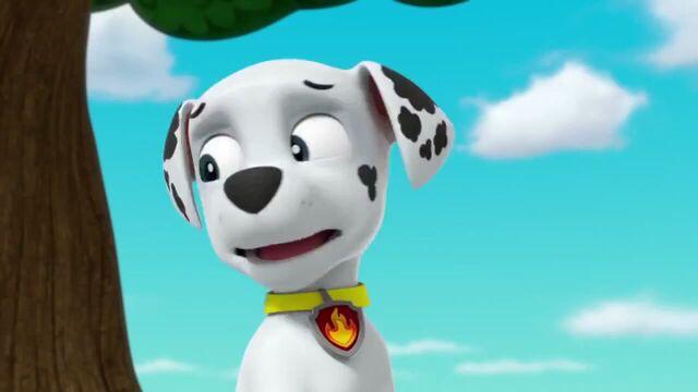 File:PAW Patrol Season 2 Episode 10 Pups Save a Talent Show - Pups Save the Corn Roast 270270.jpg