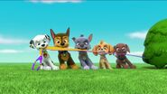 PAW Patrol Pups Save a Goldrush Scene 5