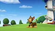 Pups get a rubble 9