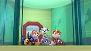 PAW Patrol Pups Save the Hippos Scene 10