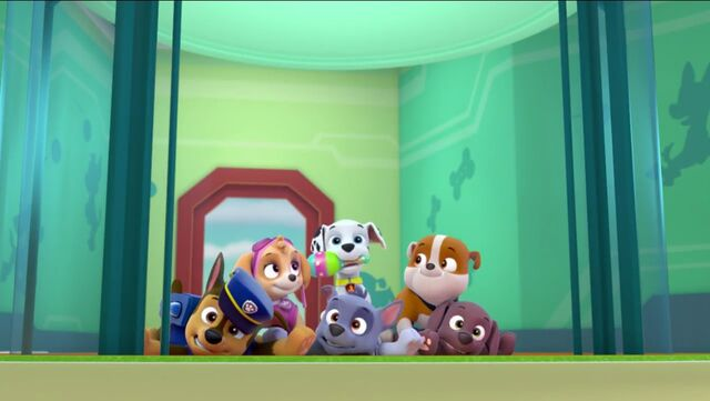 File:PAW Patrol Pups Save the Hippos Scene 10.jpg