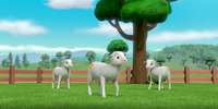 The Sheep/Gallery