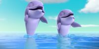 Dolphins/Gallery