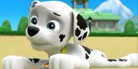 Pups Save the Turbots/Trivia