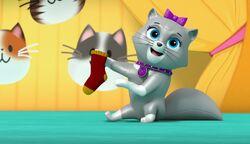 The Cat Show 36
