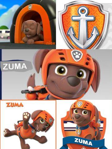 File:Zuma1.jpg