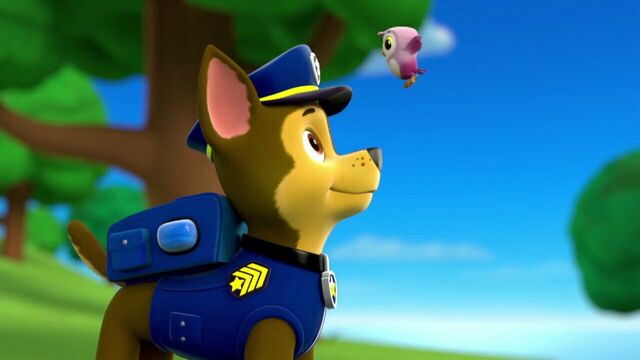 File:PAW.Patrol.S01E26.Pups.and.the.Pirate.Treasure.720p.WEBRip.x264.AAC 921053.jpg