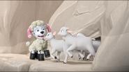 Sheep 49