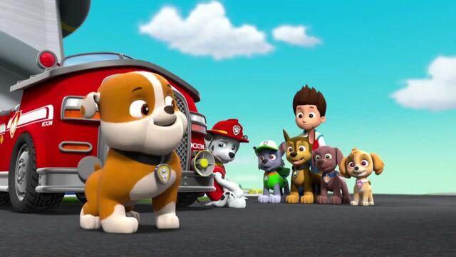 File:PAW Patrol Season 2 Episode 10 Pups Save a Talent Show - Pups Save the Corn Roast 230297.jpg