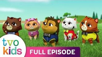 Paw Patrol SEASON 4 - Pups Save the Cat Show - ALL - NEW - EPISODE!