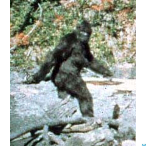 File:Bigfoot-live.jpg