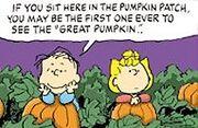 Linus Sally Pumpkin Patch