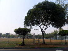 Padang Brown, George Town, Penang
