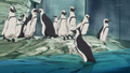 Real penguins.png