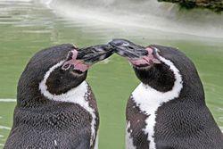 250px-Penguincotswoldwildlifepark