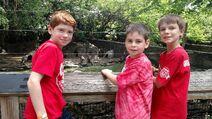 Philldaphea Zoo - Penguins (1)