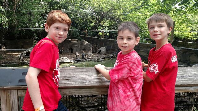 File:Philldaphea Zoo - Penguins (1)