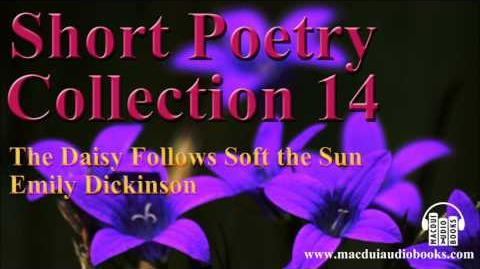 The Daisy follows soft the sun poem by Emily Dickinson Short Poetry Collection 14 Free Audio Poem