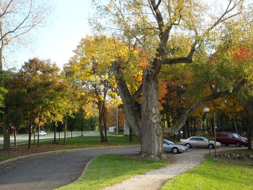 Oldest tree in Kettering