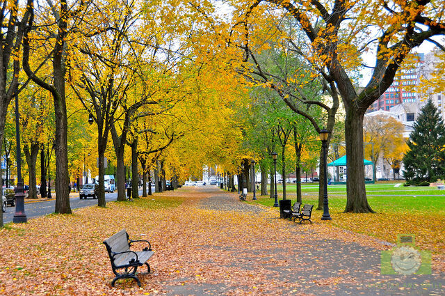File:Autumn leaves in New Haven.jpg
