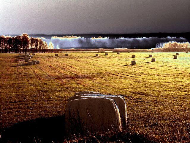 File:Foggy fields.jpg
