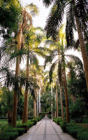 File:Palm alley.jpg