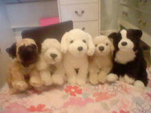 Dogs Family-1480244716