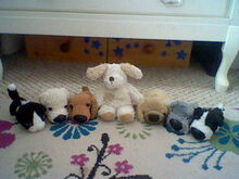 Dogs Family-3