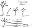 Fruit tree forms