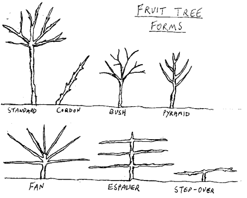 File:Fruittreeforms.png