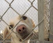 738px-Dog in animal shelter in Washington, Iowa