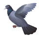 Pigeon in Flight Decal