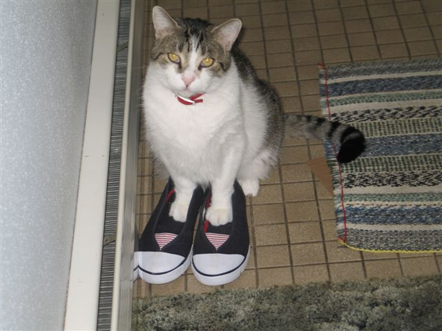 File:Buddie in norlenes shoes 004.jpg