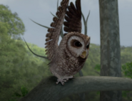 Old-Brown-Owl-About-To-Fly-Image