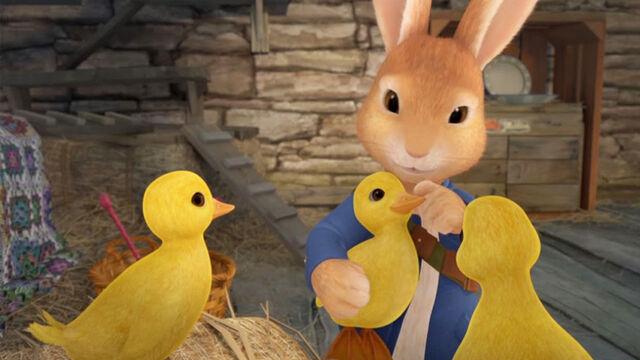 File:Peter-Rabbit-With-Missing-Ducklings.jpg