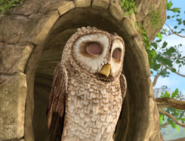 Sleeping-Owl-Brown-Image