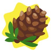 File:Homegrown pinecone.jpg