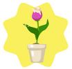 Delicate tulip