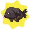 Totofish