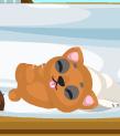 Petling bear grown1