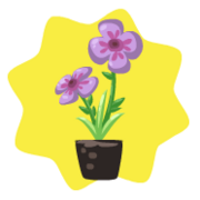 Homegrown purple pansy