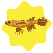 Golden african butterfly fish