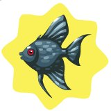 File:Black angelfish.jpg