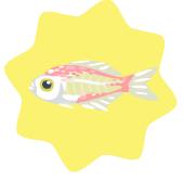 Indian glassy fish