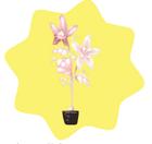 Enchanted sugar flowers