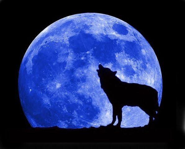 File:Blue-moon-wolf-full.jpg