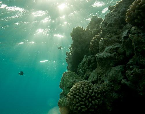 File:Sunrise on the coral reef, Shark Island, French Frigate Shoals.jpg
