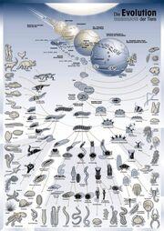 AnimalsEvolution